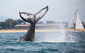 where to go whale watching in california travel leisure