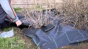 landscape fabric alternatives laying weed control fabric youtube
