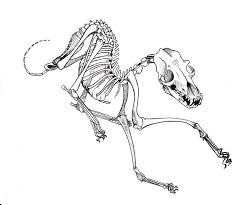 25 dog skeleton ideas pictures halloween