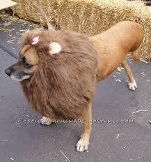 Lion Halloween Costumes Dogs Bo Peep U0027s Lost Sheep Halloween Pet Dog Costume Size Medium