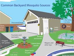 mosquito sources around your home livescomfort