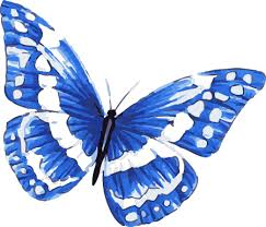 blue morpho butterfly in watercolor with white