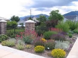landscape plants beautiful design with desert landscape design