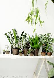 plants at home 5 ways to display green plants at home bodie and fou urban