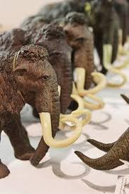 woolly mammoth hair mammuthus primigenius pleistocene siberia