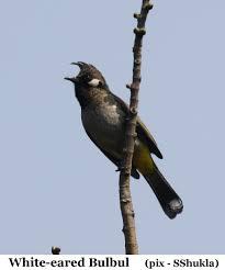 45 of india u0027s bird species in hp great backyard bird count