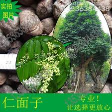 compare prices on ornamental trees seedlings shopping buy