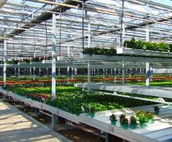 Metal Greenhouse Benches Benches U0026 Double Rail Carts Commercial Greenhouse Structures