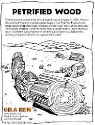 arizona state fossil petrified wood