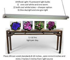 african violet grow light artificial lighting for african violet plants baby violets