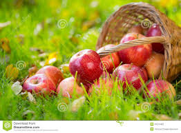 fruits flowers fruits and flowers in autumn stock photo image of fall fresh