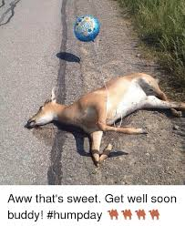 Funny Get Well Meme - aww that s sweet get well soon buddy humpday aww meme