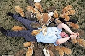 rabbit island japan tourists queue smothered cute