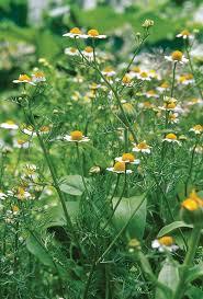 437 best images about herb garden on pinterest gardens kitchen