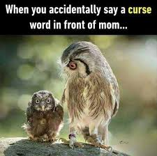 Art School Owl Meme - 15 hilarious owl memes i can has cheezburger