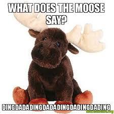 Moose Meme - what does the moose say dingdadadingdadadingdadingdading make a