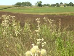 minnesota native plants list restoring the landscape with native plants propagating remnant
