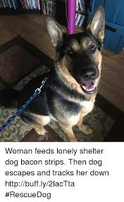 Bacon Strips And Bacon Strips Meme - woman feeds lonely shelter dog bacon strips then dog escapes and