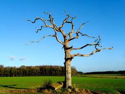 straggle tree in tarrant monkton totally dorset