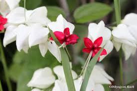 beautiful flowers of assam dibyajyoti koch a blog on oracle