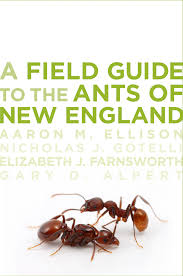 plants native to new england a field guide to the ants of new england harvard forest