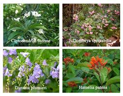 Types Of Garden Flowers - horticulture landscaping types of garden