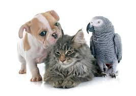 three diseases to look out for in your dogs cats and birds