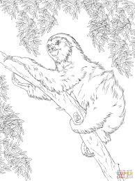 sloth coloring coloring pages adresebitkisel