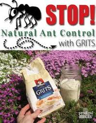 these powerful herbs u0026 flowers deter pests naturally in the