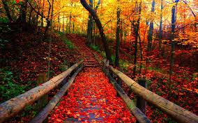 leaves leaf autumn color forest fall nature tree seasons landscape