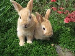 rabbit rabbit pin by breanna on rabbits and bunnies rabbit