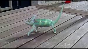 Lizard Meme - lizard meme party youtube