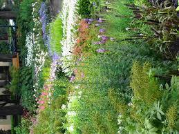 small flower garden layout image perennial home garden ideas 20 wonderful perennial gardens