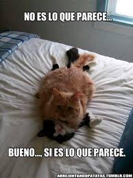 Gato Meme - fotos mira los mejores memes de gatos en el inicio de su mes