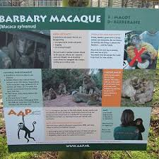 bartender resume template australia zoo expeditions maui to molokai wingham wildlife park photo galleries zoochat