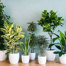 home interior plants tlc the tree and landscape company taking care of indoor plants
