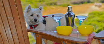 Cottages That Allow Dogs by Cottages At Point Reyes Seashore Pet Friendly Pt Reyes Lodging