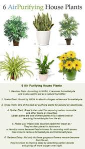 6 air purifying house plants 6 air purifying house plants 1