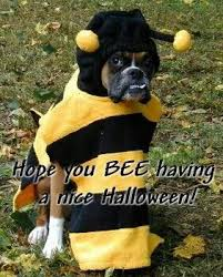Halloween Costumes Boxer Dogs 290 Boxer Dogs Images Boxer Love Animals