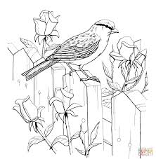 chipping sparrow and roses coloring page free printable coloring