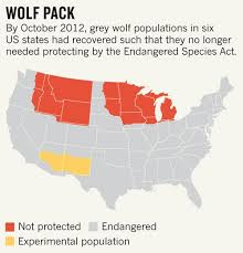 us map jpg grey wolf map jpg nature news comment
