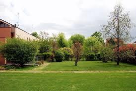 albero giardino albero da giardino alberi latifolie alberi da giardino