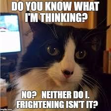 Crazy Cat Memes - 10 best cat memes images on pinterest cat memes crazy cat lady