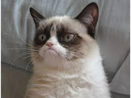 Gato Meme - meme de internet del â gato gruã onâ tendrã contrato cinematogrã fico