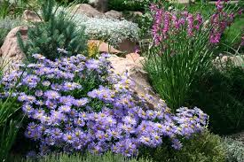 Best Plants For Rock Gardens Plants For Rock Gardens A Rock Garden Complete With Running