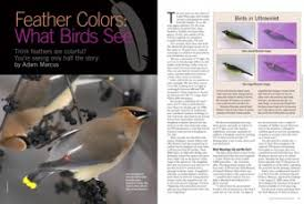 uv light for birds how the ability to perceive ultraviolet light permits birds to see