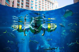 scuba diving courses dubai atlantis the palm