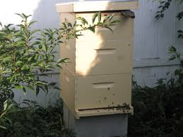 bandit backyard beekeeping just another wordpress com site