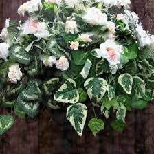 Best Plants For Hanging Baskets by The 25 Best Plants For Hanging Baskets Ideas On Pinterest