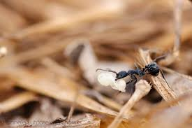 ant logi sti cs u2013 what happens when an ant colony decides to move